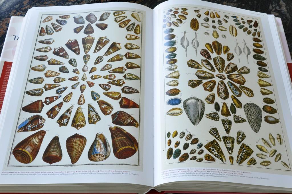 Cabinet of Natural Curiosities - Shells