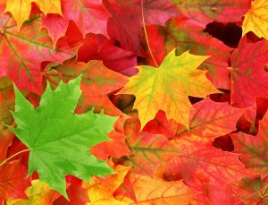 free_fall_leaves_shutterstock_61538884_web