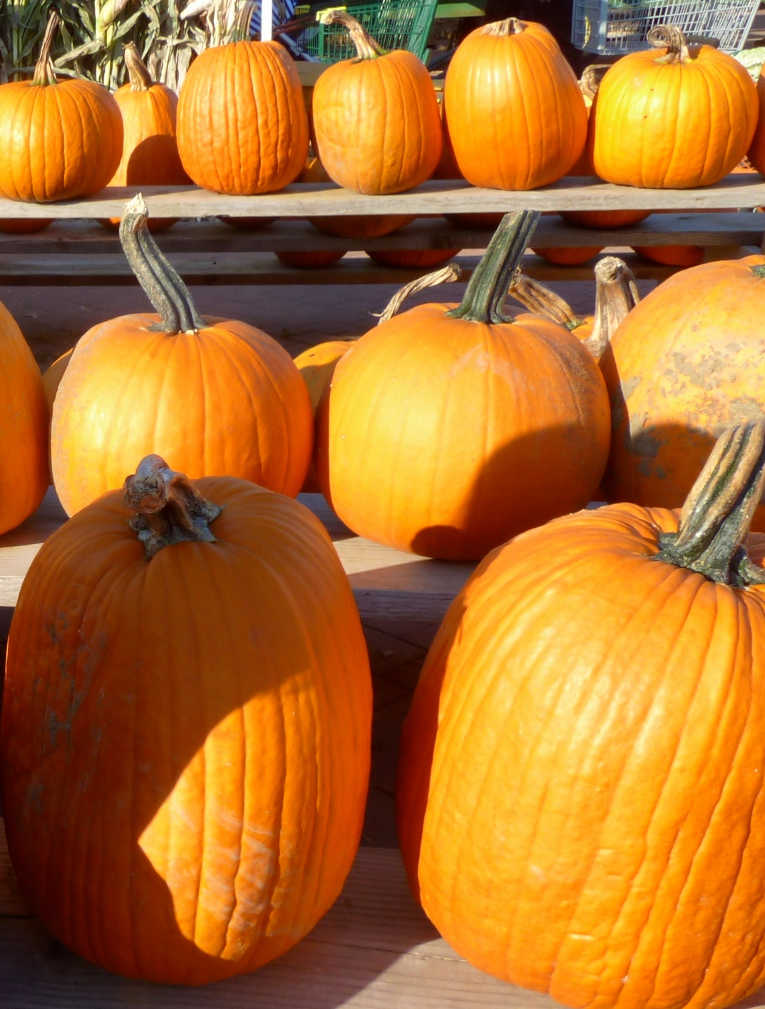Create Fun Fall Memories: 16 Ways to Enjoy Autumn With Your Family