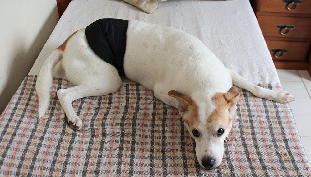 Fralda Pet Fralda lavável para cães machos