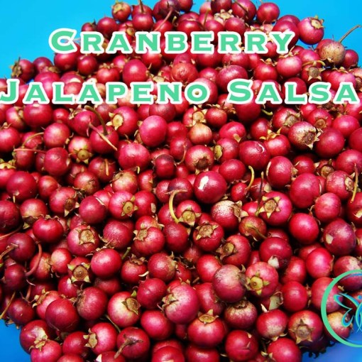 Festive Cranberry Jalapeño Salsa