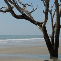 Simple Beauty - Botany Bay, Charleston, SC