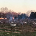 Burning barrels to try and save peaches from freeze