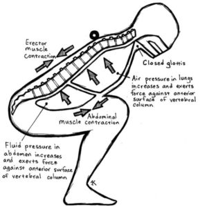 imafe of breathing to squat lower