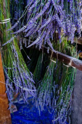 Herbs: Medicinal, Culinary, and Dye Plants