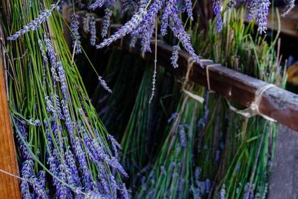 Herbs: Medicinal, Culinary, and Dye Plants
