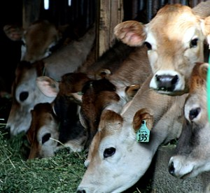 Have you herd? Farm Tour this weekend!