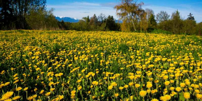 Flower Blooms: A Calendar of Bee-Friendly Flowers Through the Year