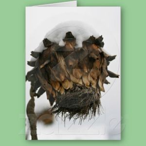 Cardoon in winter - from our garden - on a card