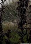Spiderweb stretch