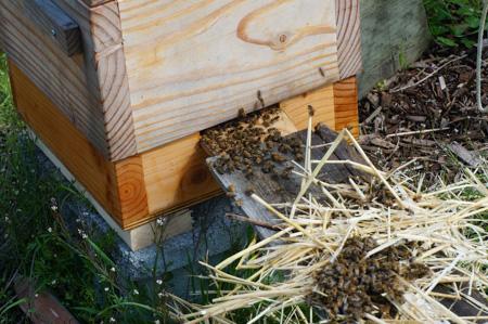 Bee Swarm Saga
