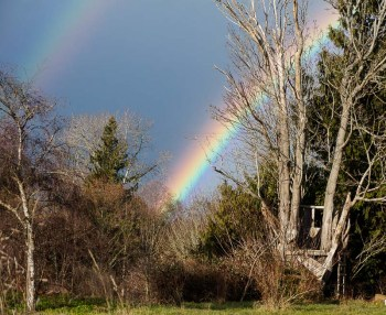 Double rainbow behind the old treehouse in the maple tree