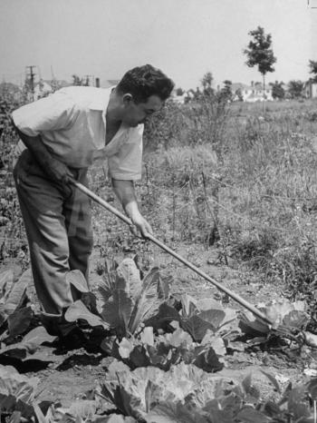 Man tilling soil in his victory garden