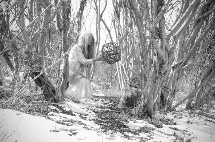 Willow Ball in Winterland