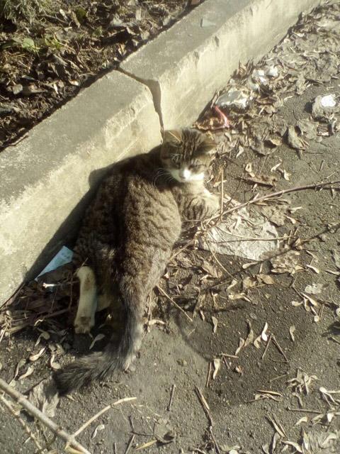 Срочно помочь коту!
