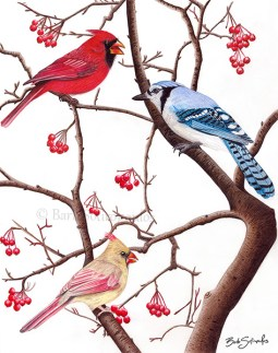 """""""Birds of a Feather""""11×14 in, Colored Pencil on Fabriano Artistico Hot Press Watercolor Paper 2016. Original photo reference Sally Robertson. Copyright released. All images copyright Barb Sotiropoulos. All Rights Reserved. (Prints Available)"""