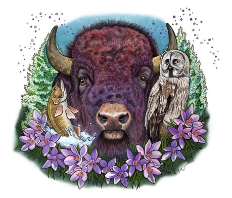 """""""Glorious & Free"""" 14×11 in Colored Pencil, Acrylic Ink and PITT Pens on Hot Press Watercolor Paper 2017. All images copyright Barb Sotiropoulos. All Rights Reserved. This illustration is 3 of 14 in the Canada 150 series. It is inspired by the provincial symbols of the Province of Manitoba and includes the Plains Bison, Great Grey Owl, Prairie Crocus, Walleye Fish, and White Spruce Tree."""