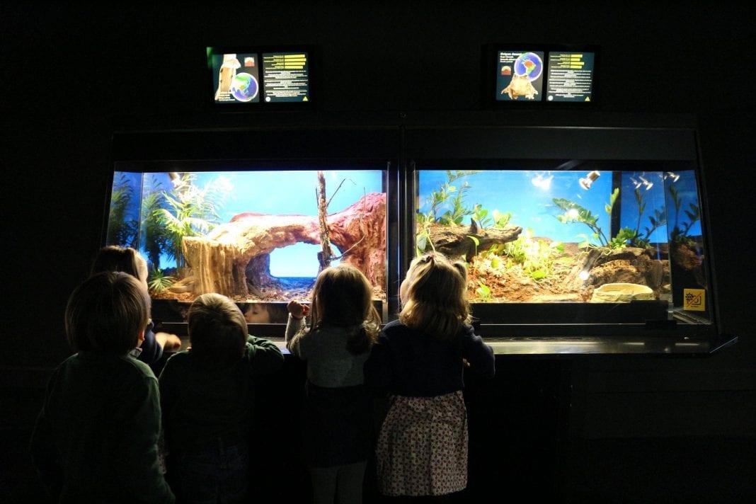 Resultado de imagen de imatges nens als museus