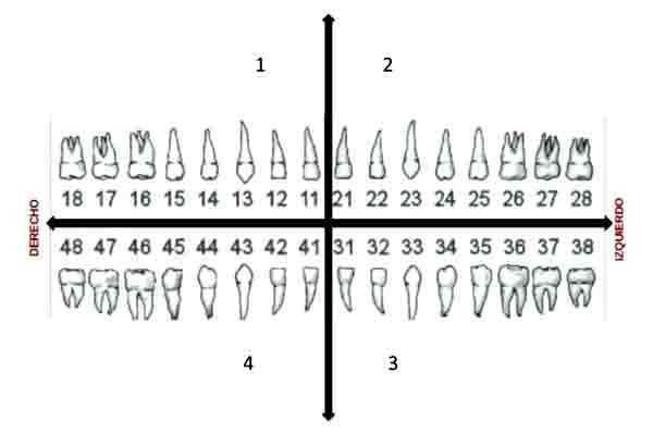dientes_mapa
