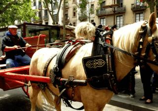 carruajes de caballos