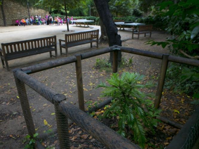 Barcelona 30/09/2014 a pie de calle jardins de la tamarita hay una  palmera , la Wollemia Nobilis , especie con doscientos millones de antiguedad Foto Ferran Nadeu