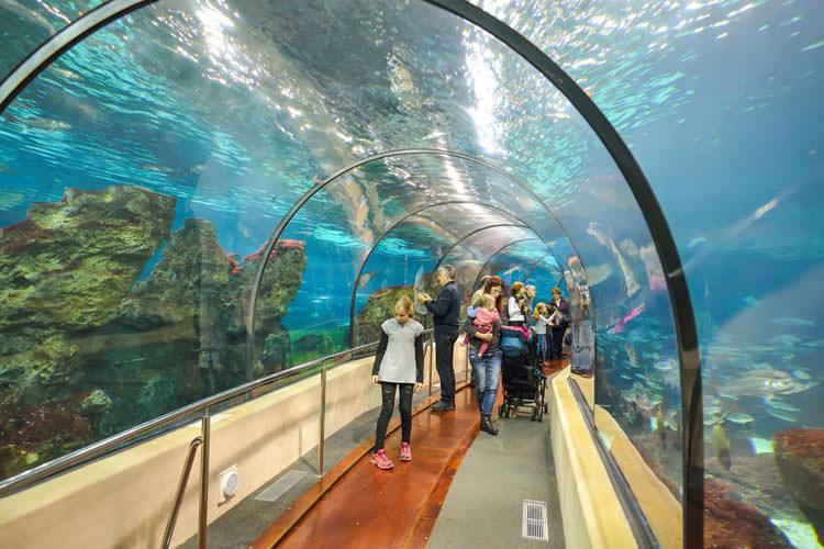 Tunnel en kinderen in Aquarium Barcelona