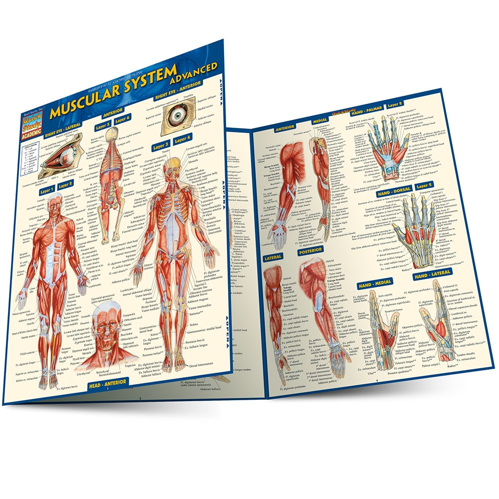 Quick Study QuickStudy Muscular System Advanced Laminated Study Guide BarCharts Publishing Academic Medical Guide Main Image