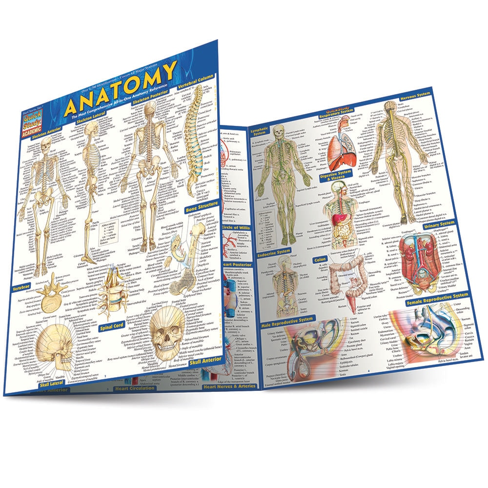 Quick Study QuickStudy Anatomy Laminated Study Guide BarCharts Publishing Anatomy Reference Guide Main Image