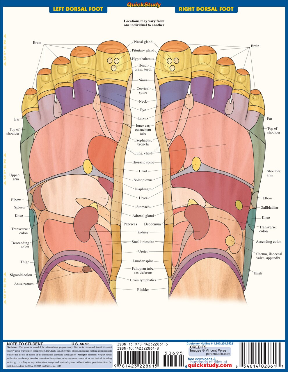 Quick Study QuickStudy Reflexology Laminated Study Guide BarCharts Publishing Medical Reference Guide Back  Image
