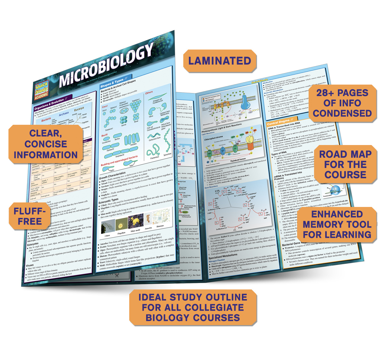 QuickStudy Quick Study Microbiology Laminated Study Guide BarCharts Publishing Science Study Guides Benefits