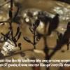 শ্বাসরুদ্ধ শেকড় ও তেলবন্দি ভ্রুণ