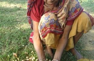 কুঁই: একটি অচাষকৃত উদ্ভিদের সুস্বাদু ফল