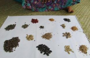 বরেন্দ্র অঞ্চলে পরিবারভিত্তিক খাদ্য নিরাপত্তায় নারীদের ছোট ছোট উদ্যোগ