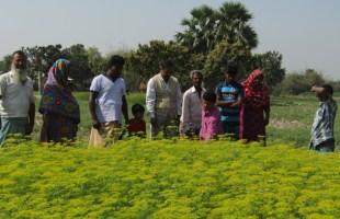জলবায়ু পরিবর্তন মোকাবেলায় কৃষকদের উদ্যোগকে স্বাগত জানালেন কৃষি সম্পসারণ অধিদপ্তর