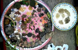 রিশিকুলে নবান্ন উৎসব ও প্রাণবৈচিত্র্যমেলা