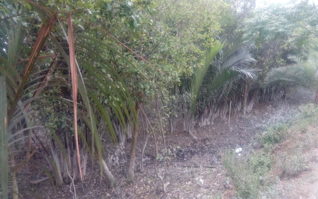 Ruposhi Mangrove (2)