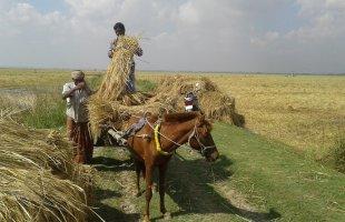 শুভ বিদায় হেমন্ত