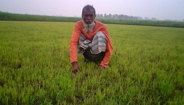 ছকিল উদ্দিন আজ একজন সফল কৃষক