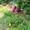 করোনাকালে পরিবেশ ভাবনা