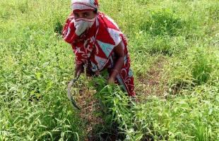 চর এলাকায় খাদ্যনিরাপত্তা নিশ্চিতকরণে নারীদের উদ্যোগ