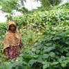 একজন পরিশ্রমী নারী ফিরোজা বেগম