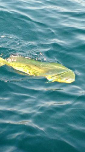 pesca-em-altomar-281x500