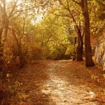 Poesía en Bardulias: Simple Things
