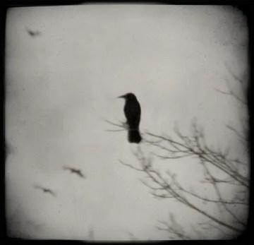 Poesía en Bardulias: Días de cuervos