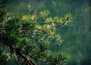Poesía en Bardulias: De la lluvia en verano