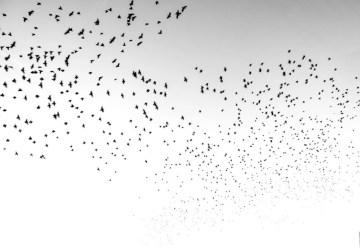 Poesía en Bardulias: Pájaros del Jardín