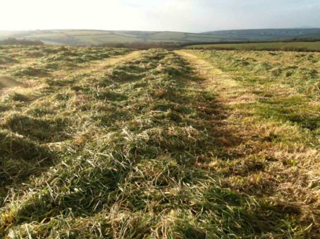freshly mown hay in the barefoot glamping meadows cornwall