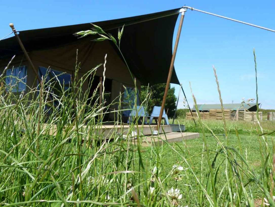 Hobie and woody safari tents though the long grass at barefoot glamping cornwall
