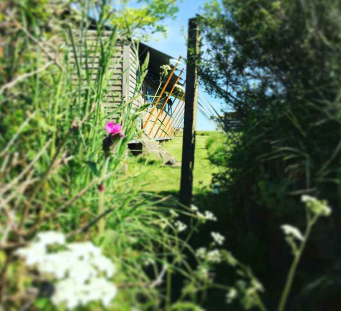 looking through the gap in the Cornish hedge at Hobie safari tent at barefoot glamping Cornwall