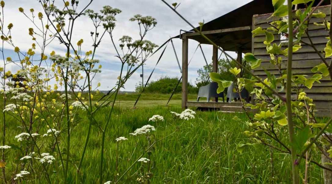 looking through wildflowers at rusty the tin tent converted shipping container at barefoot glamping Cornwall